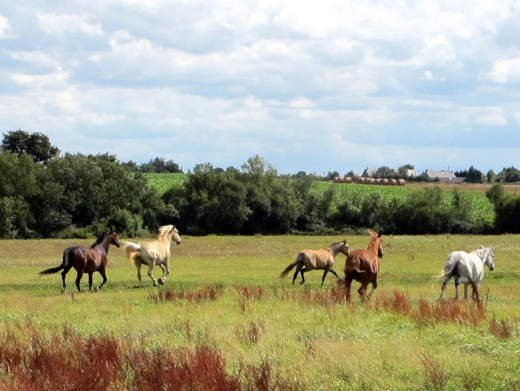 Les chevaux / Horses